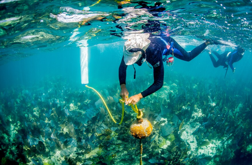 a snorkeler works on a mooring buoy at the florida keys national marine sanctuary