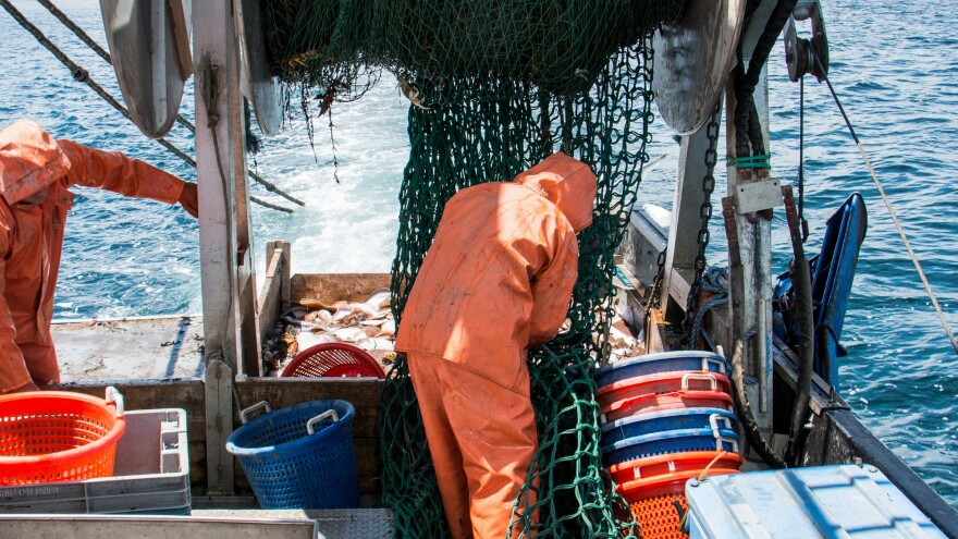 Portland's Gulf of Maine Research Institute has designed a trawl net that aims to target species that can still be profitable while avoiding cod.