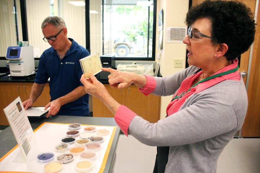 Pam Marrone (right), founder and CEO of Marrone Bio Innovations, inspects some colonies of microbes. Marrone has spent most of her professional life prospecting for microbial pesticides and bringing them to market.