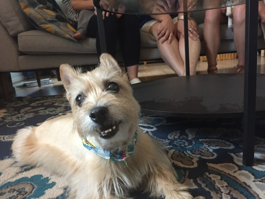 The Anderson's Cairn Terrier, Buffy