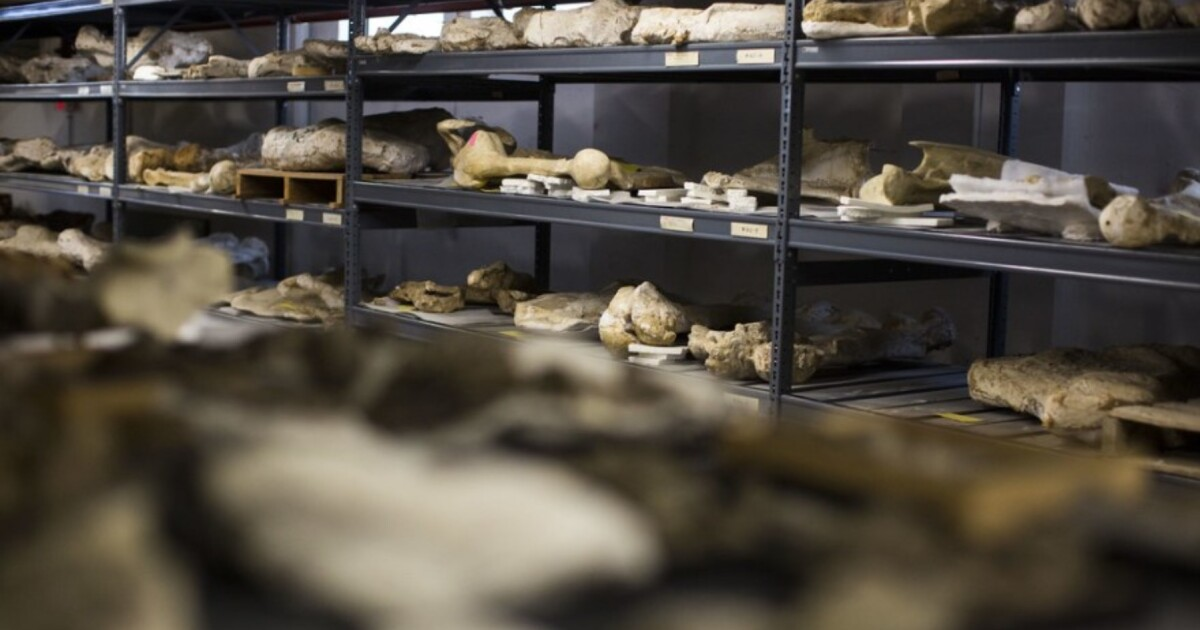Rediscovering A Hidden Trove Of Fossils In Austin, Texas