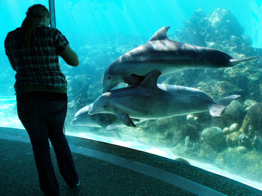Underwater view of the dolphin tank.