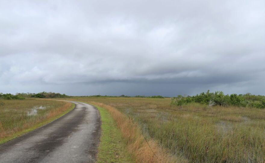 Road view of The Shark Valley of Everglades National Park