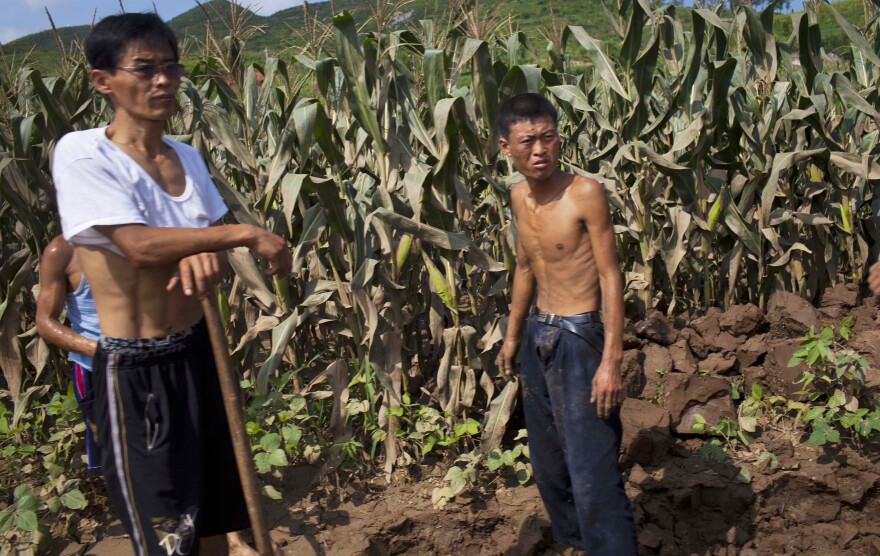 The U.N. says food supplies in North Korea have increased, but citizens who spoke to NPR say many people are going hungry. In this photo from Aug. 13, workers stand next to a field that was damaged by flooding in Songchon County, North Korea.