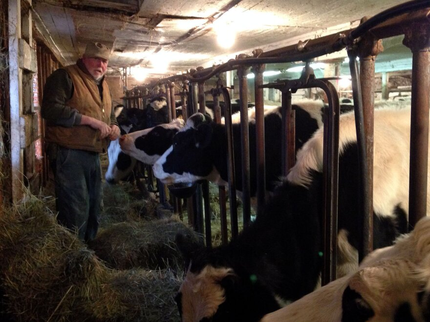 """Dairy farmer Bob Andrews feeds heifers in the same barn his grandfather used. He says today """"the harder you work, the further you get behind."""""""