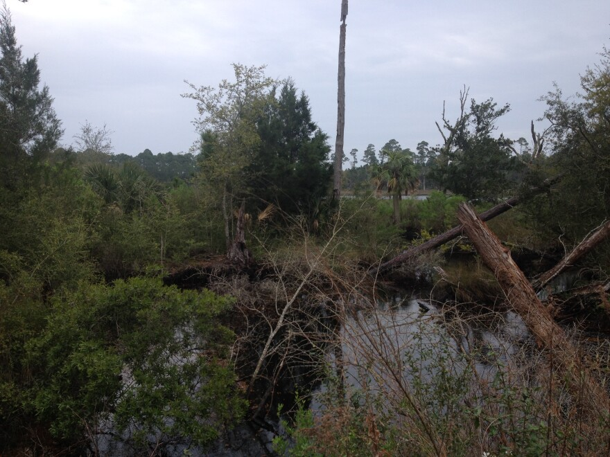 Dead trees and standing water comprise most of this bufferzone along a Wakulla wetland.