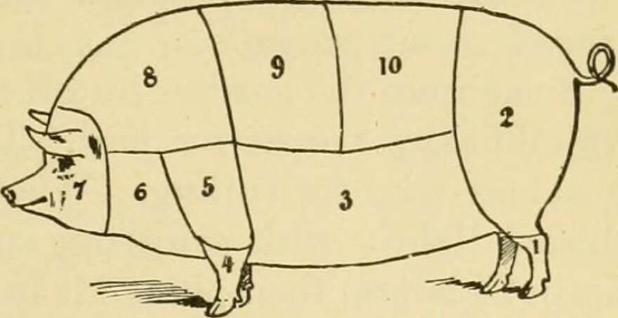 6. Lower Neck:—Used for sausages or lard.