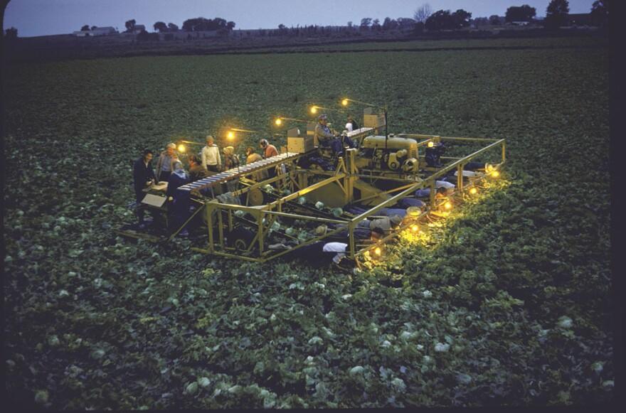 Farmer Bob Chickering at dusk driving lamp-studded lettuce harvester he invented, 1955