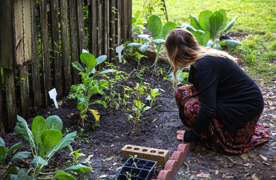 A female student kneels near a plot of land with collard greens growing.