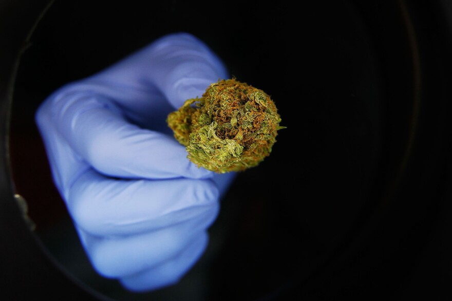 In states that made medical marijuana legal, prescriptions for a range of drugs covered by Medicare dropped.
