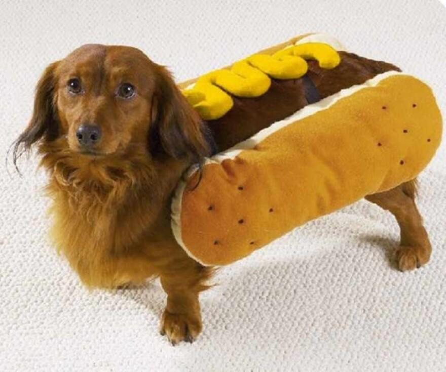 mustardhotdog.jpg