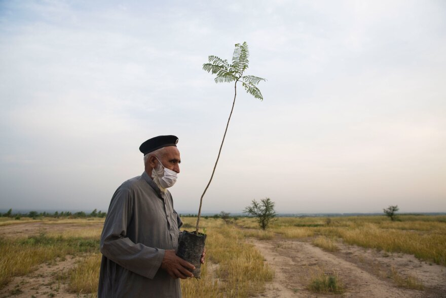 On the outskirts of Peshawar, Adalat Khan holds a tree sapling that's part of an initiative to plant 10 billion trees to deal with climate change threats.