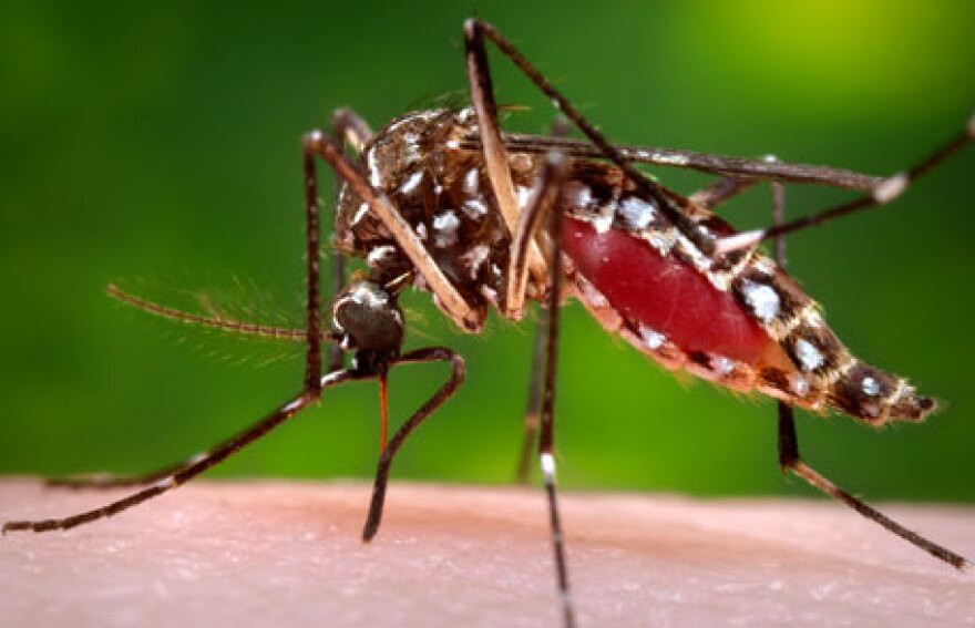 Mosquitos are just one of the types of insects out in full force in Florida this season.