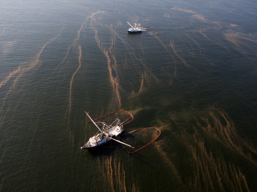 Shrimping boats pull absorbent oil boom to collect the crude floating on the surface in the Chandeleur Sound off the coast of Louisiana. The BP oil spill started with a rig explosion that killed 11 workers, and gushed 4 million barrels of oil into the Gulf of Mexico.