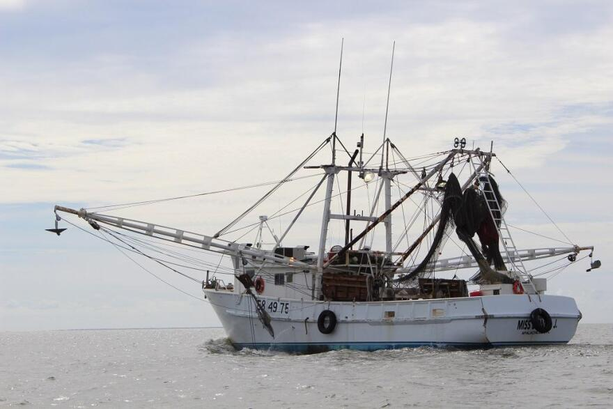 A shrimp boat heads out into the Apalachicola Bay.