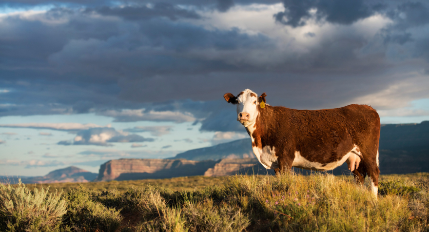 A congressman from Washington state has introduced a bill that would allow conservation groups to buy ranchers' grazing permits on public lands and retire them.