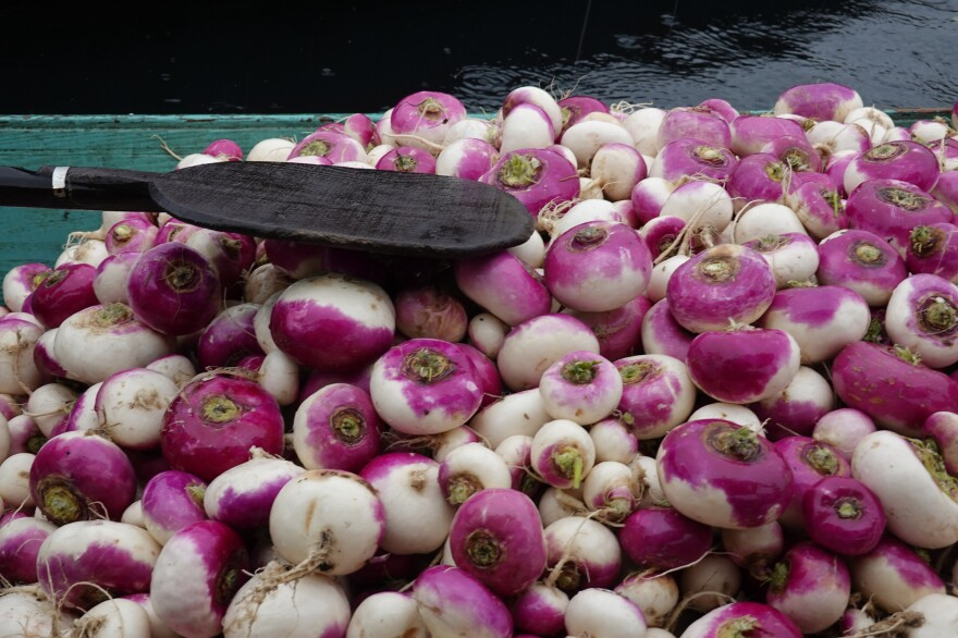 Turnips are one of the main winter vegetables traded at Dal Lake's floating market.