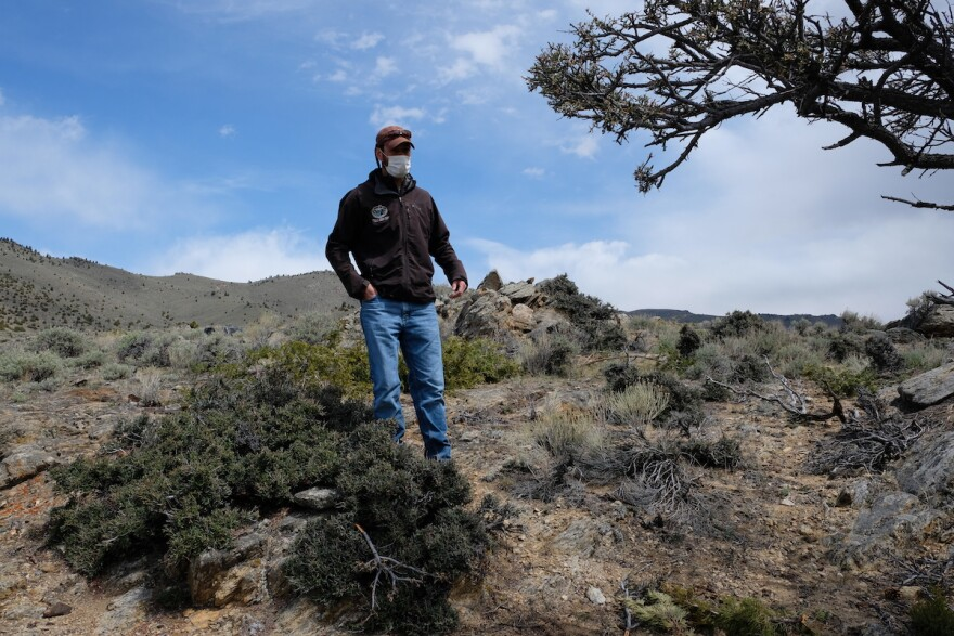 Sean Claffey, coordinator for the Southwest Montana Sagebrush Partnership, walks past curl-leaf mountain mahogany in the sagebrush steppe on land managed by the DNRC near Dillon, Montana, May 12, 2020.