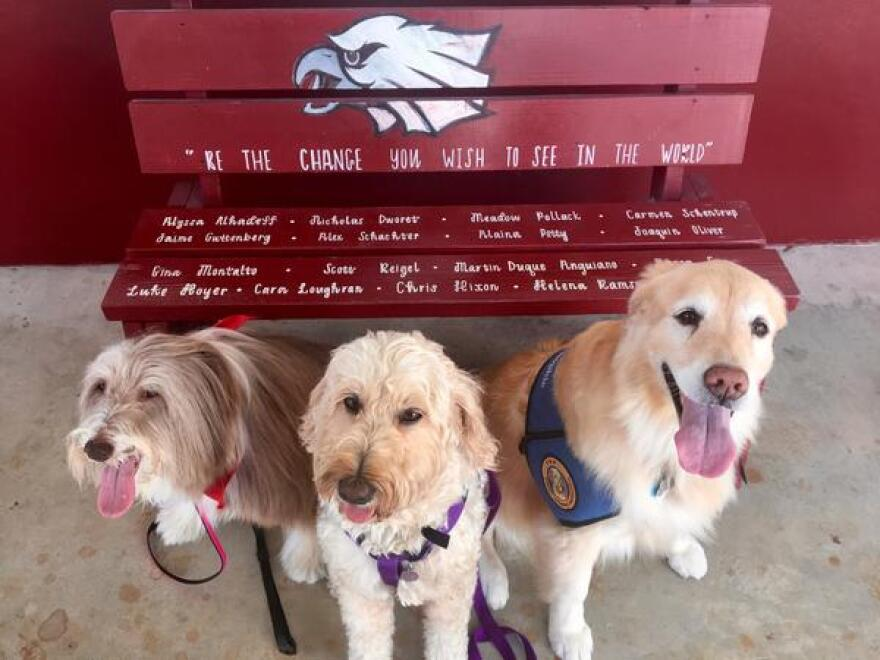 From left, therapy dogs Daisy, Fergie and Sophie pose in front of a memorial bench near the main office at Marjory Stoneman Douglas High School.