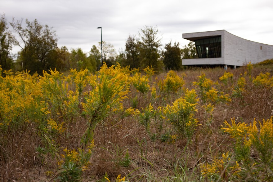 A field with yellow flowers sits in front of the Trinity River Audubon Center.
