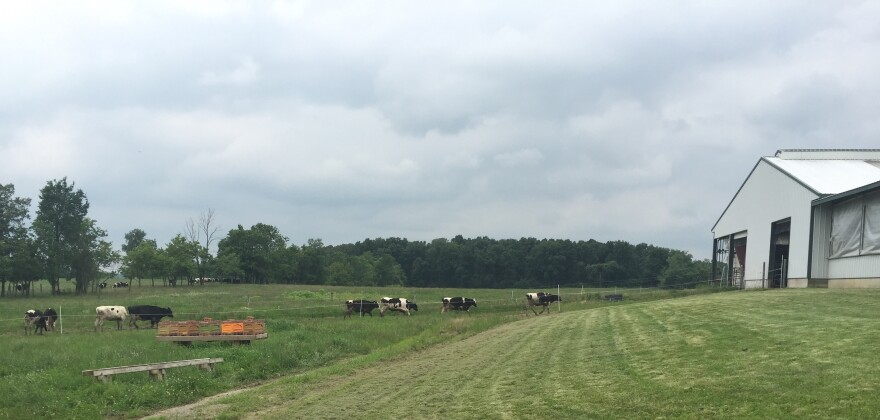 The Miller Dairy Farm in Logan County, just south of Belle Center, Ohio, is a hundred and five acres of rolling green pastures. It's home to a hundred or so dairy cows and another 200 heifers. They've got a few horses, some sheep, a llama and other barnya