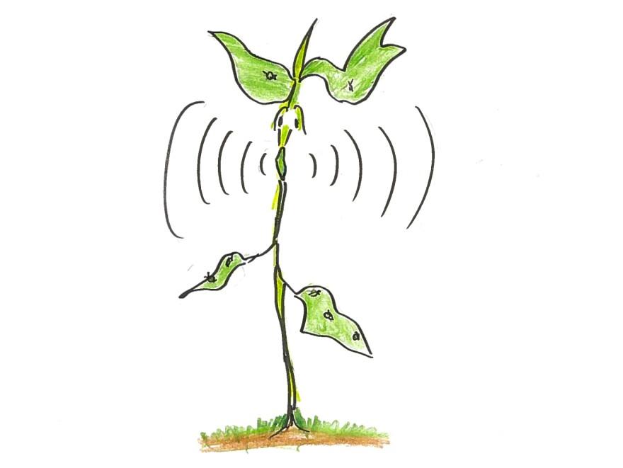 4. A bean plant screaming.