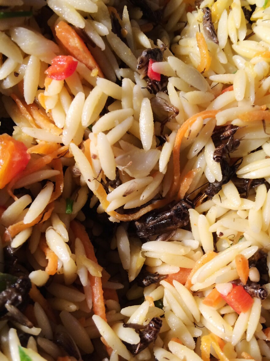 Orzo with organic cricket nymphs
