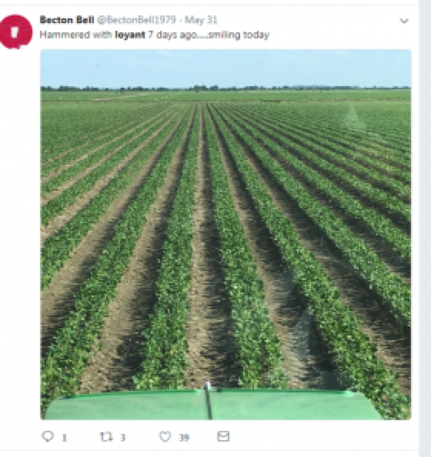 One of the social media comments on loyant, a newly-released rice herbicide.