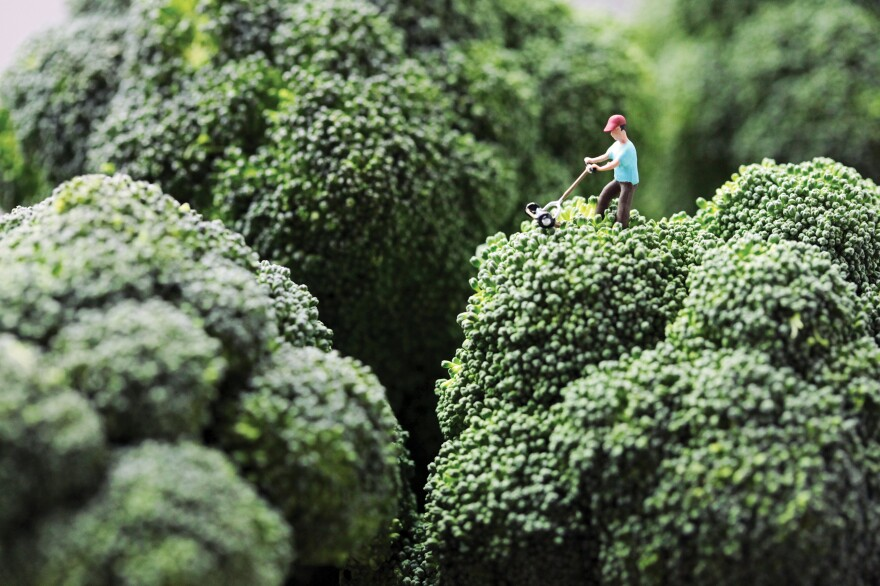 """<em>Broccoli Mower</em>: """"Douglas stubbornly refused to accept his wife's opinion that he had let the lawn go too long without attention."""""""