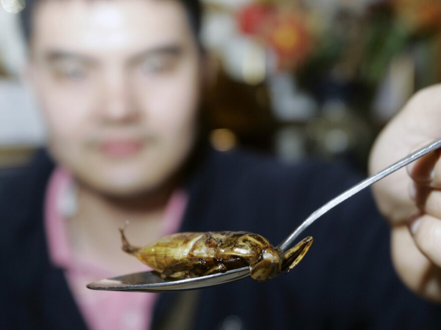 <p>A customer holds up a spoon of deep-fried water bug in a restaurant in Thailand. Insects are a popular food in Thailand and many other countries around the world.</p>
