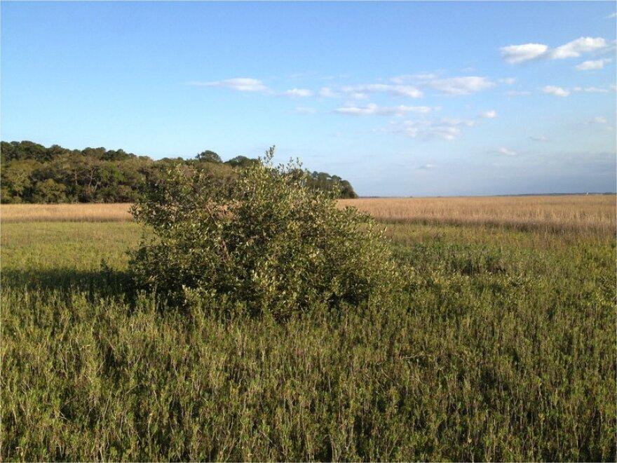 mangroves_kyle_cavanaugh.jpg