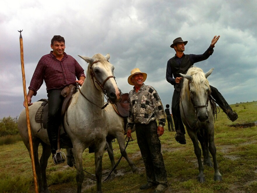 <em>Gardiens</em>, or cowboys, Renaud Vinuesa (on horseback, left) and Olivier Terroux (on horseback, right) are out in the Camargue region of southern France for a branding, or <em>la ferrade</em>, with their tridents.