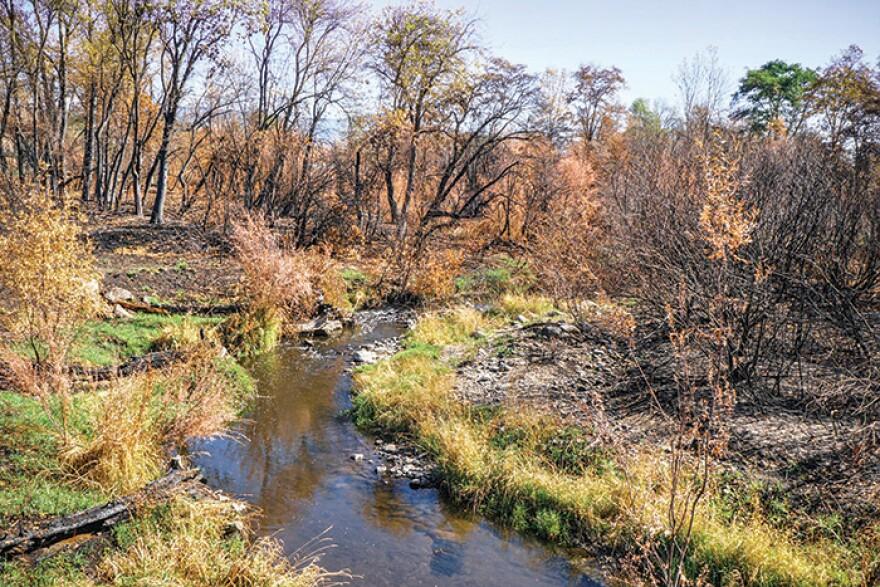 CREEK_1_Bear Creek.jpg