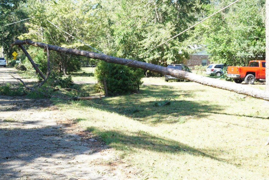 tree and power line in roadway
