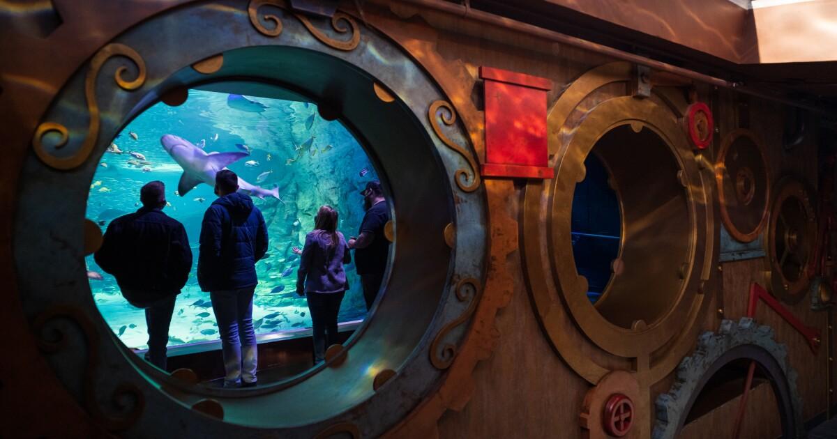 St. Louis Aquarium Employees Raise Concerns About Lax COVID Rules Enforcement