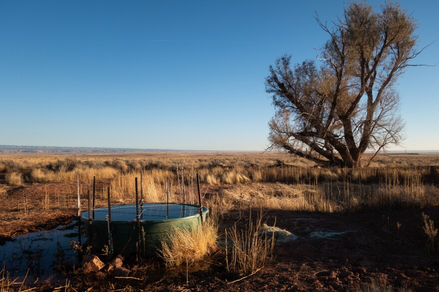 Against a back-drop of dry grass and a low-growing tree, a cattle trough overflows next to a dry pond bed.