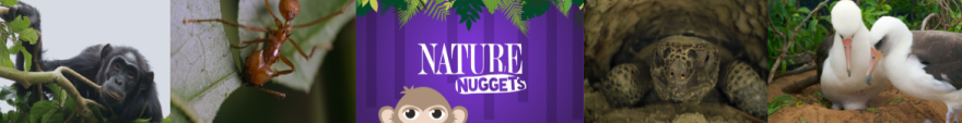 Nuggets_bann.png