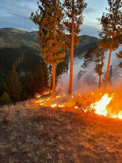 Forest officials want the public's help in Plant Creek Fire investigation