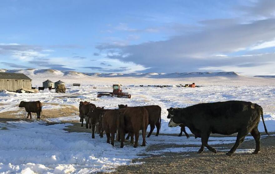 The Montana Department of Livestock is investigating bovine tuberculosis after three diagnoses with potential connections to Montana herds.