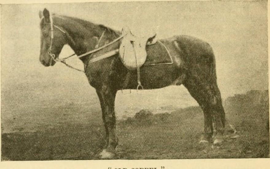 stonewall-jackson-horse.jpg