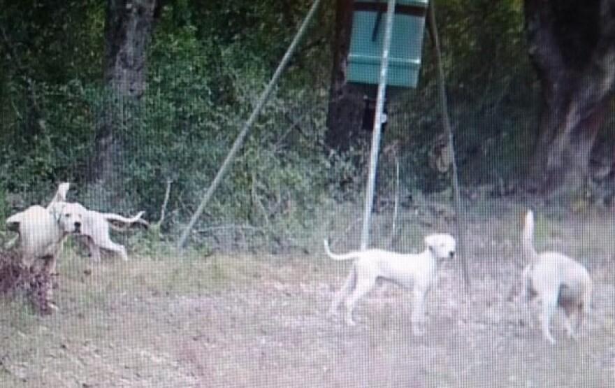 Dogs Seen On Kirkland Road.jpg