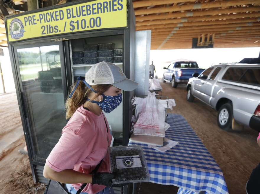 Kahley Novak fills an order with blueberries for drive in customers Tuesday, April 21, 2020, at Southern Hill Farms in Clermont, Fla. Customers are ordering their blueberries online and then picking them up by car due to coronavirus instead of picking blueberries themselves in the fields as they've done in seasons past. (AP Photo/John Raoux)