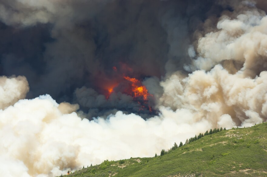 wildfire_cameron_gull.jpg