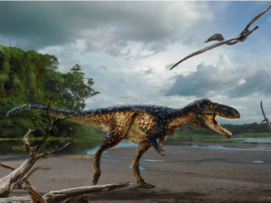 Horse-sized primitive tyrannosaur <em>Timurlengia euotica</em> from the middle Cretaceous (ca. 90 million to 92 million years ago) of Uzbekistan.