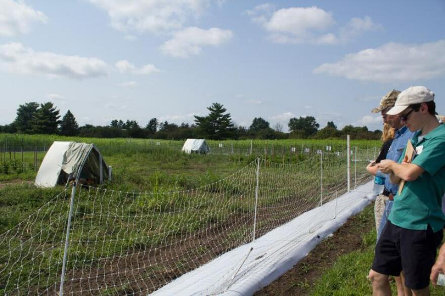 Farmers attended a fruit and vegetable field day at the Iowa State University horticulture research farm, where chickens are being evaluated as a means of improving soil health on organic vegetable fields.