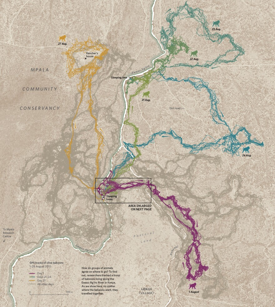 A map in <em>Where the Animals Go </em>shows how baboons move near the Mpala Research Centre in Kenya, as tracked by anthropologist Margaret Crofoot and her colleagues in 2012.