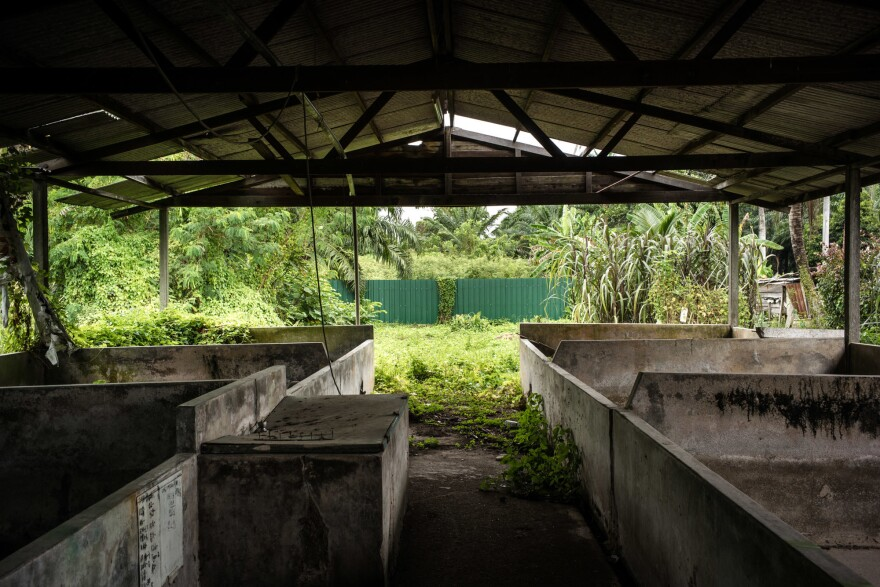 An abandoned pig farm near the center of the Nipah outbreak in the state of Negeri Sembilan. This region was at the center of Malaysia's booming pork industry in the early 1990s and was home to nearly 1 million pigs. All the farms have since been shut down.