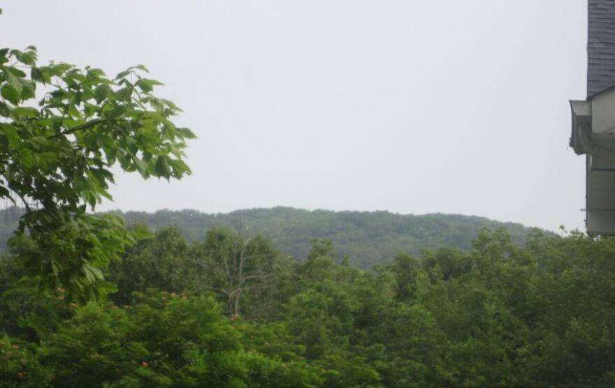 A forest in Gray Summit, Missouri.