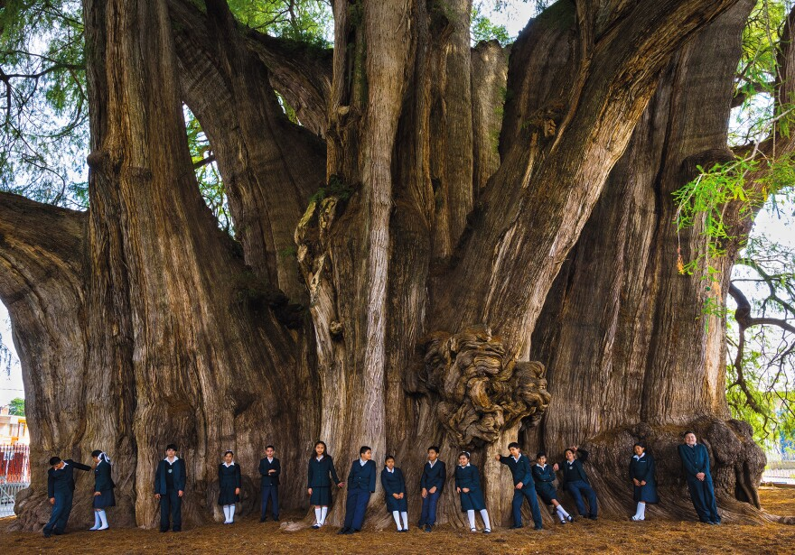 "Mexican children on a school field trip admire this Montezuma cypress — said to be the widest (138 feet in circumference) and oldest (1,200 to 3,000 years) tree of its kind. Authorities diverted a major highway to spare the tree and dug a deeper well because of disappearing swampland. ""We kept thinking, would they do all this in America for a tree?"" says Len Jenshel."
