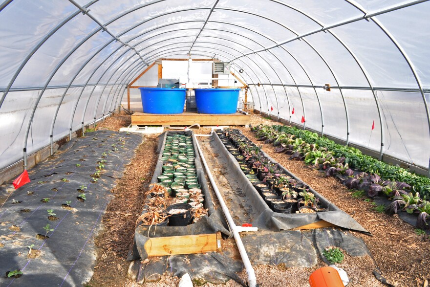 The remnants of several projects wait for spring in a hoop house at the farm this past winter. The blue pools at the end have grown fish in the past and beds are being transitioned from fall plants to spring.